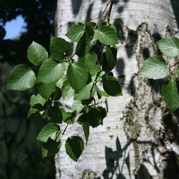 Wildkräuter und Bäume im Herbst am 09.10.2021