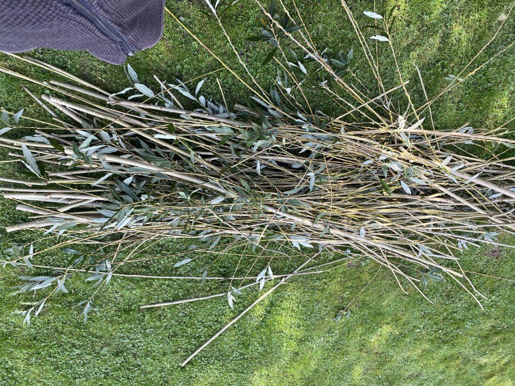Hochbeet aus Weiden bauen
