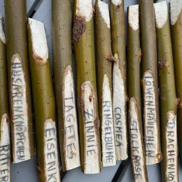 Pflanzenstecker aus Weiden zum Selbermachen