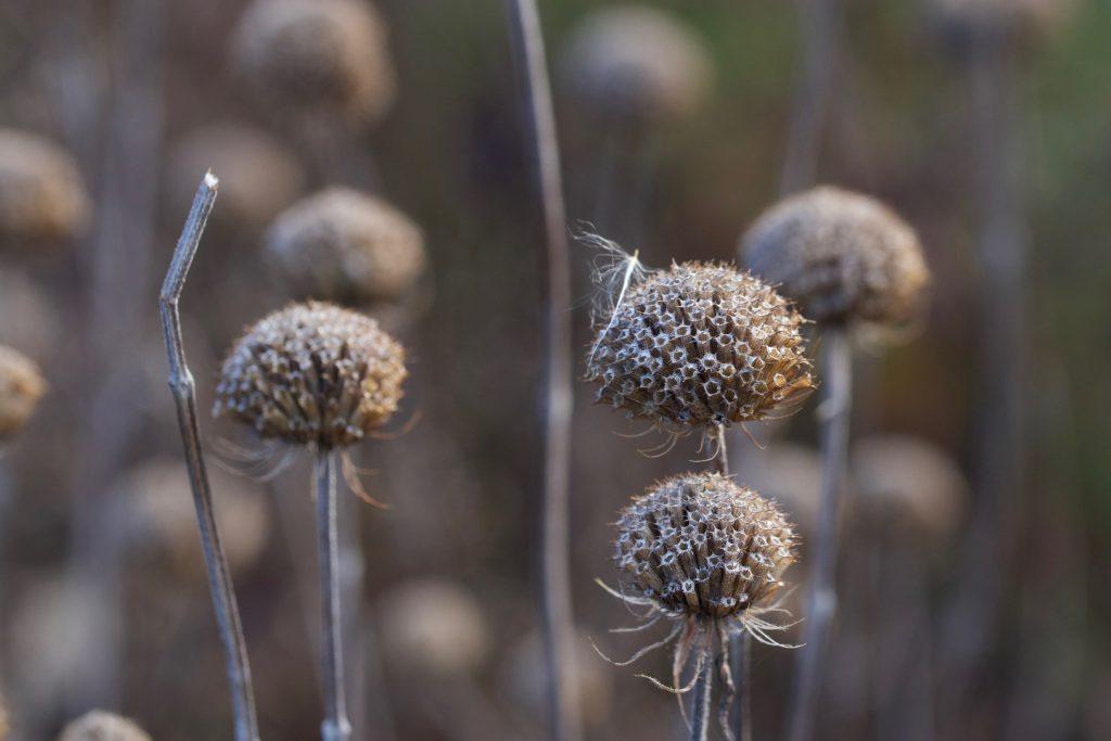 Blütenstände Wildkräuter