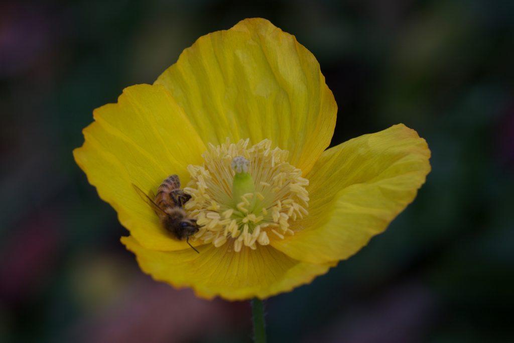Biene samenfest