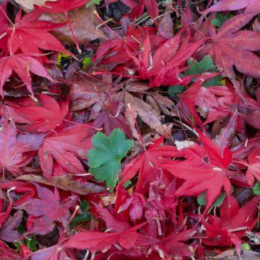 Herbstimpressionen aus dem Berggarten